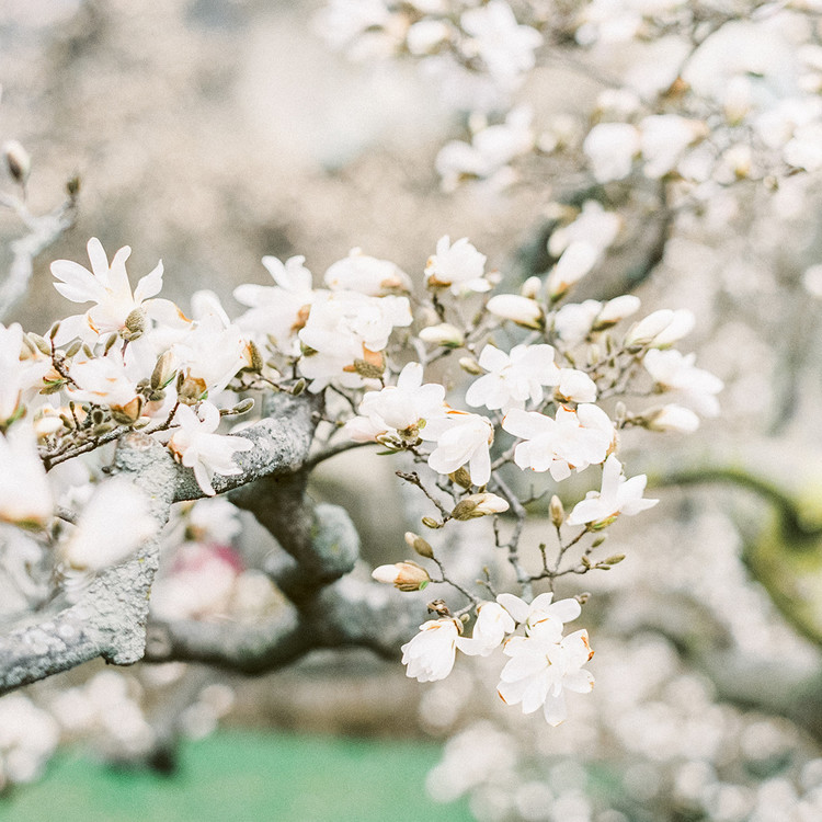 A Charitable Cherry Blossom Baby Shower At The Brooklyn Botanic