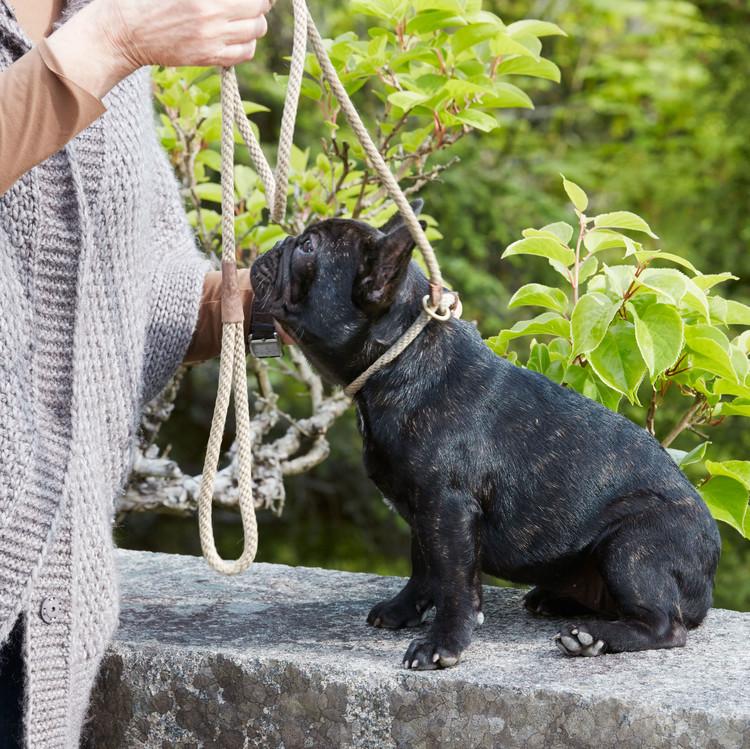 martha training with her french bulldog