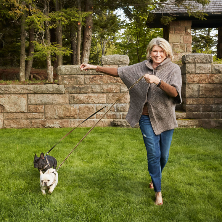 martha training with her french bulldogs outside